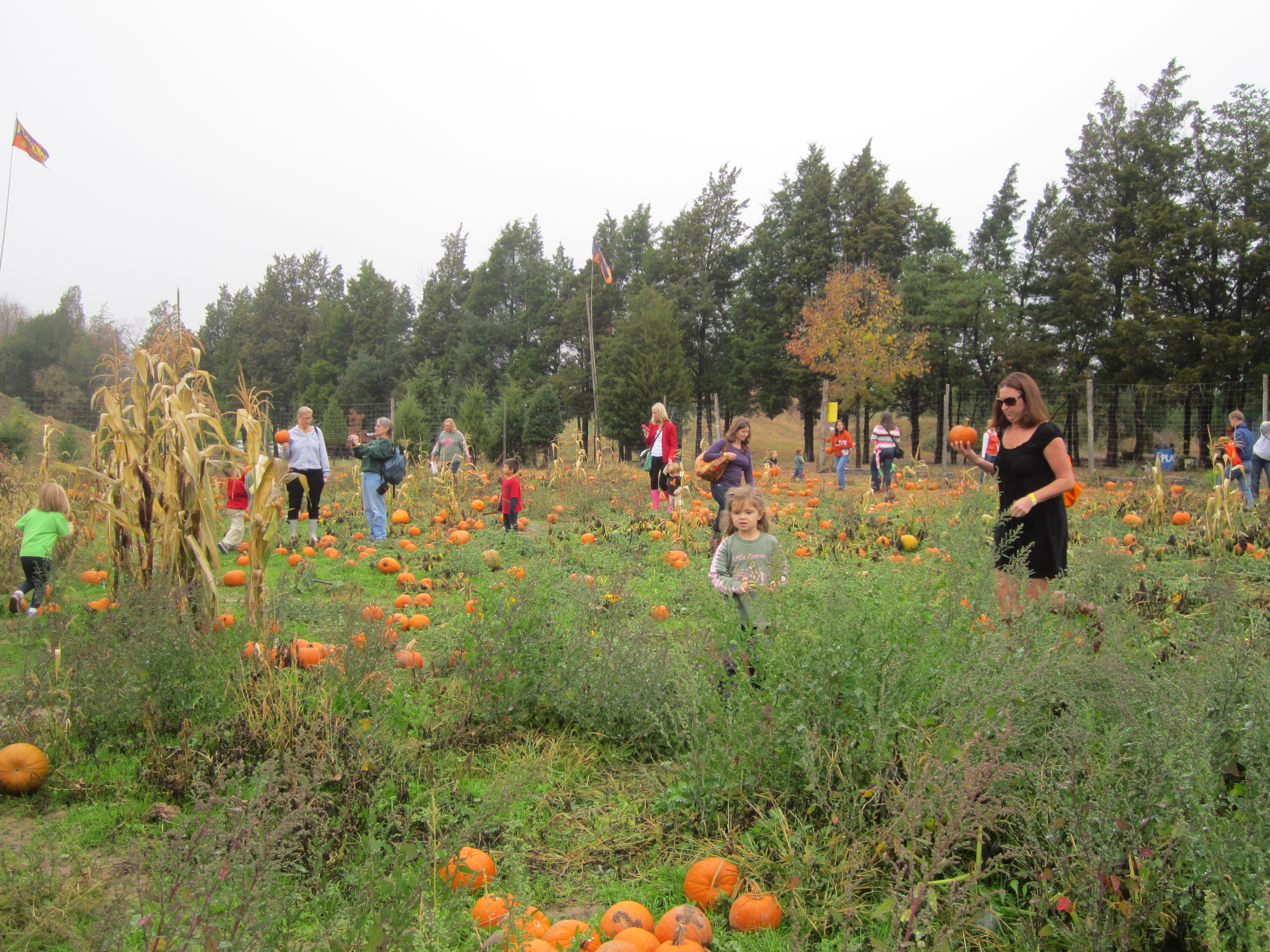Pumpkin_Picking_NoVa