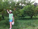 Heartland Orchard