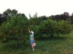 Makintosh Fruit Farm