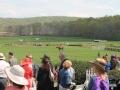 Virginia_Gold_Cup_2014_Meadow_2