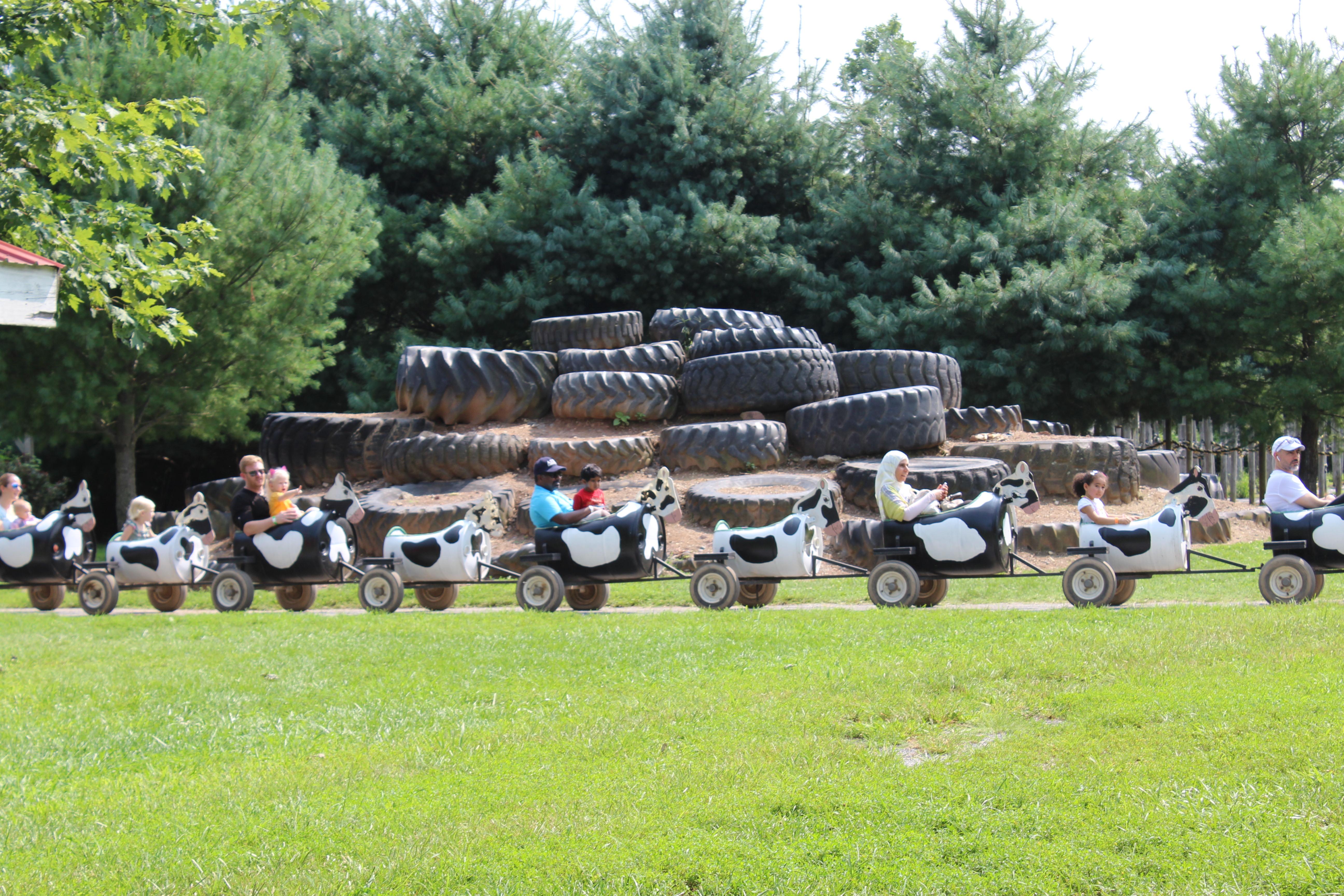 Cow-Wagon-Ride