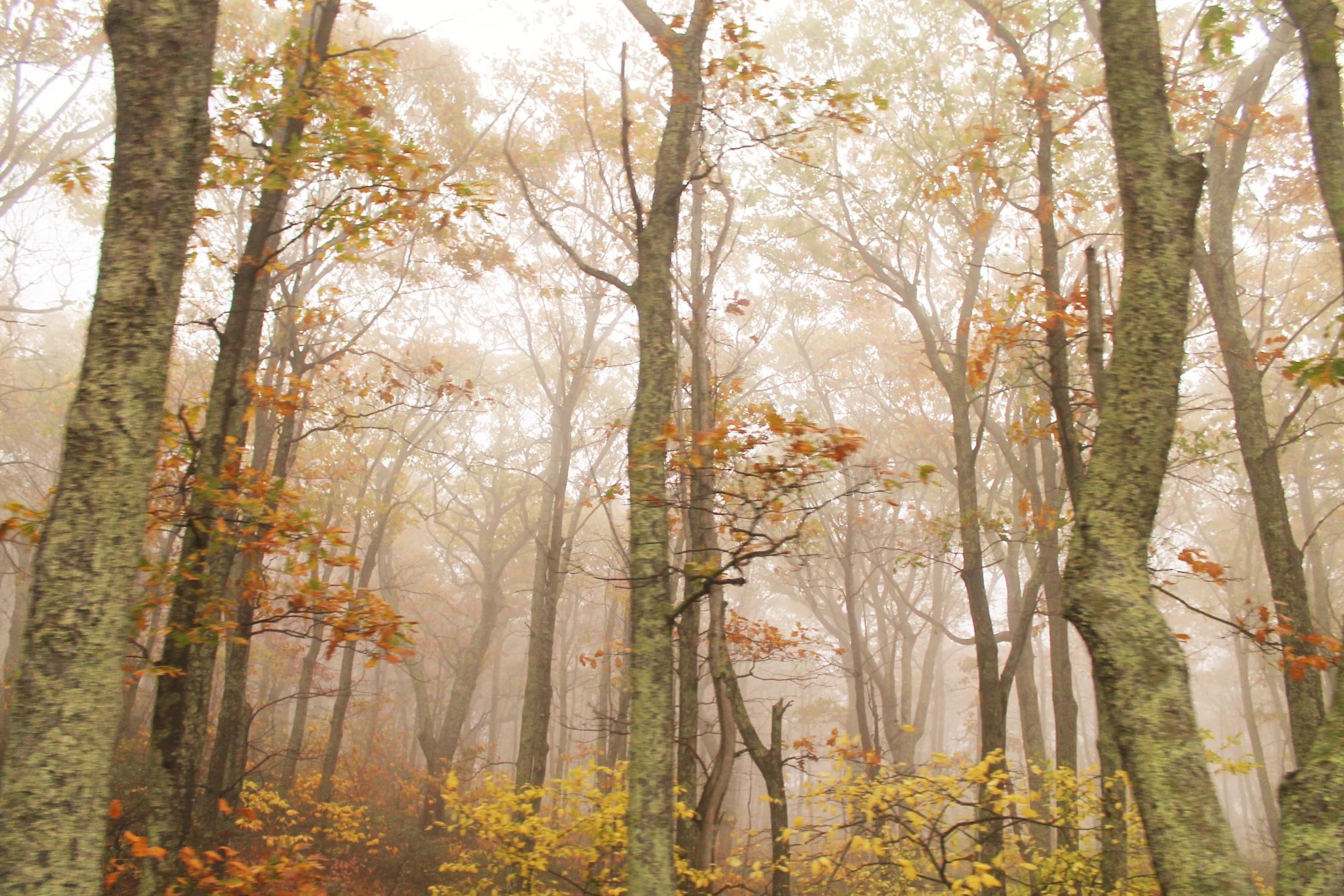 Leaf Peeping Adventure – Three Important Tips