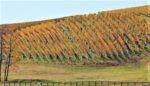 Quattro Goombas Winery