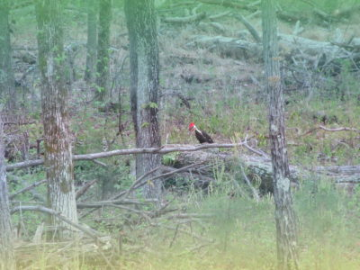 Pic 2 Click – Woodpecker Feast