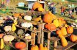 Wayside Farm Fun