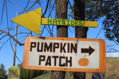 Find Your Favorite Fall Event in Northern Virginia